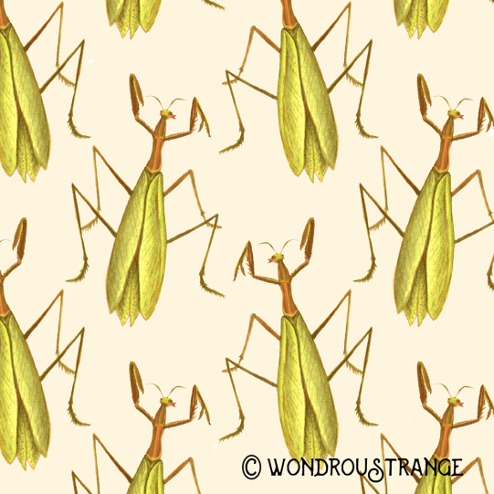 Praying mantis Pattern display