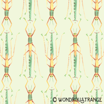 Stick Bug Pattern 2 Display