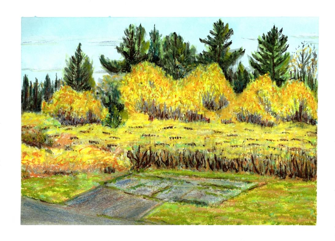 2017-10-18 landscape 2