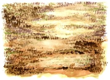 2017-10-18 meadow study